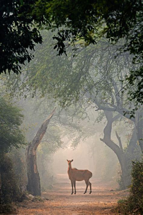 bird sanctuary  india  keoladeo national park
