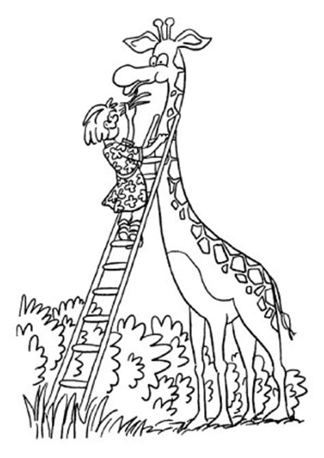 ausmalbilder giraffe wird gefuettert giraffen malvorlagen