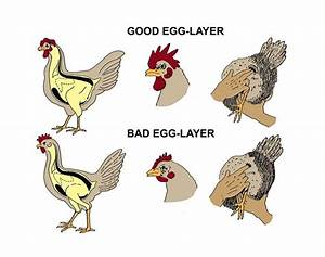 17 Best images about The chicken or the egg? on Pinterest