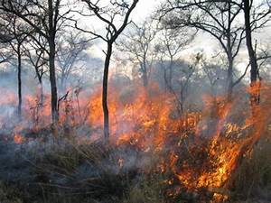 Decades Of Increased Burning Depletes Soil Carbon
