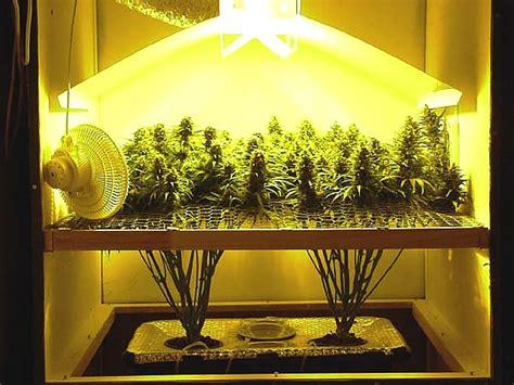 chambre de culture cannabis interieur conseils importants pour la culture du marijuana en