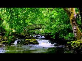 Relaxation Music Nature Sounds
