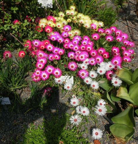 Garten Pflanzen Forum by Exotische Pflanzen Winterhart Pflanzen Fur Den Garten