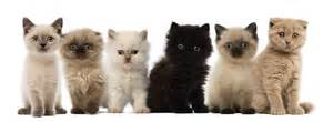 6 cats evers veterinary clinic kitten package