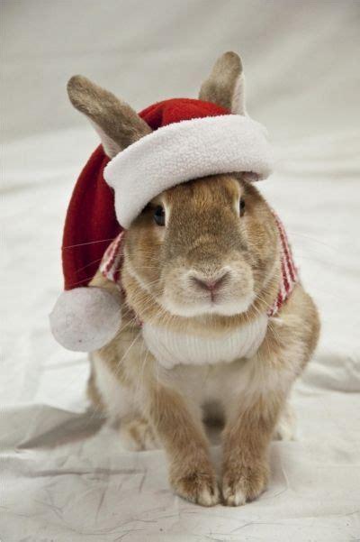 bunny christmas meme festival collections