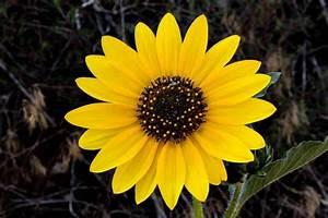 67+ Vintage Sunflowers Tumblr - Sunflower Garden Art ...