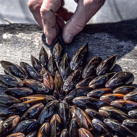 cote cuisine julie andrieu recettes eclade de moules julie andrieu