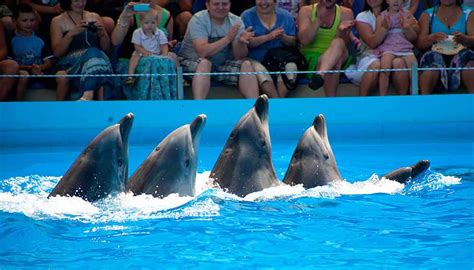 pattaya dolphinarium joinfull