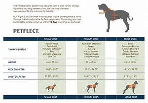 Boxer Size Chart Dog Bing Images Dog Stuff Pinterest