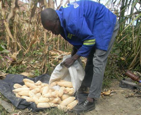 economic chaos  causing  food security  humanitarian crisis  zimbabwe