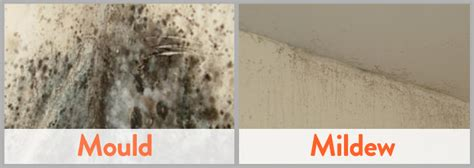 How To Clean Mould From Bathroom Tiles And Walls
