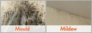 how to clean mould from bathroom tiles and walls drench With how to get rid of mold in the bathroom walls