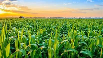 Pertanian Indonesia Dalam Peran Dan 1366
