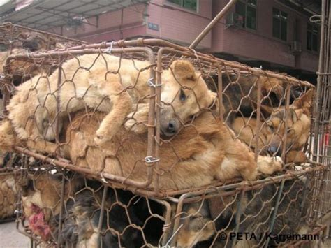 Join Me In Protest A Nst The Torture Cruelty To