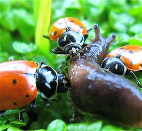 1000 images about beneficial organisms and plants on