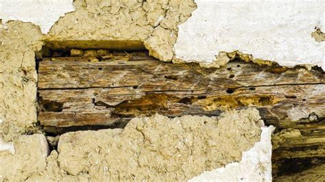 holzbock im dachstuhl hausbock parisek saniert gmbh  kg