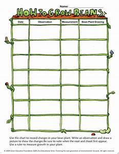 Growing Plants  Growth Charts And Beans On Pinterest