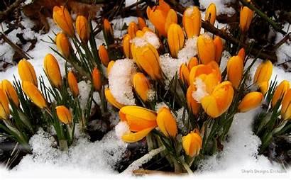 Solomon Song Spring Scriptures Flowers Scripture Psalm