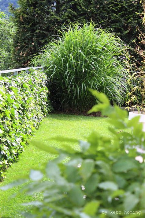 gräser für den garten winterharte gr 228 ser garten winterharte gr ser garten ziergras winterhart garten gras sorten