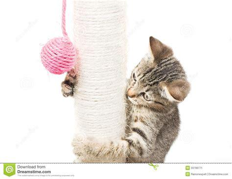 small cat playing  ball stock image image