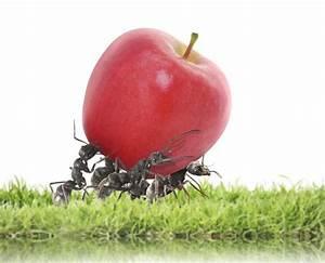 Hausmittel Gegen Ameisen Im Garten : was tun gegen ameisen was tun gegen ameisen im garten 8 tipps tricks hausmittel gegen ameisen ~ Whattoseeinmadrid.com Haus und Dekorationen