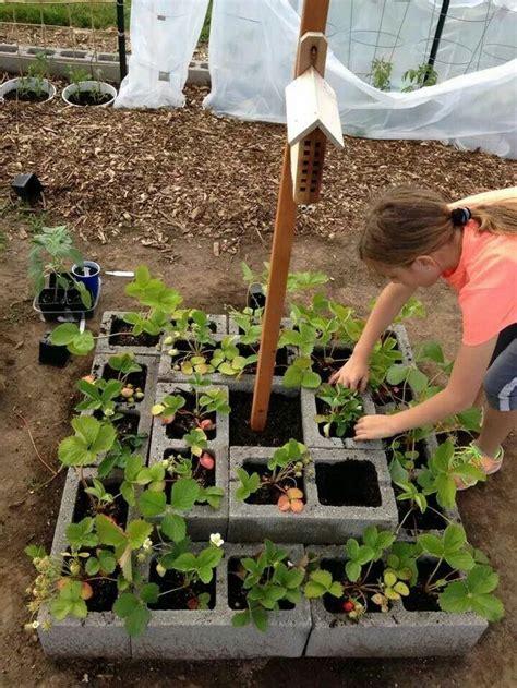 Best 25+ Cinder Block Garden Ideas On Pinterest