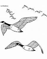Coloring Goose Geese Snow Flying Drawing Sound Printable Line Wild Birds Coloringbase Bullet Journal Landing Sheets Coloringpages4kids sketch template