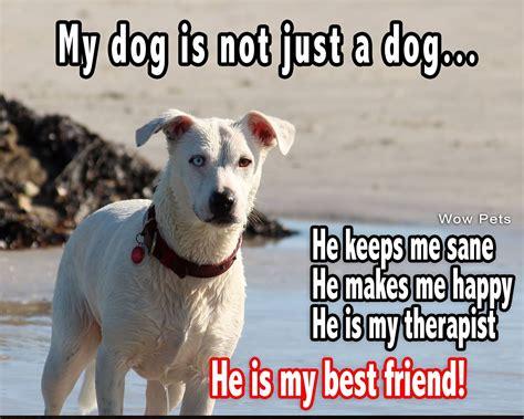 dog     dog     friend dog