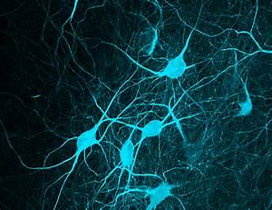 Talking Back To The Brain  Using Light To Uncover The