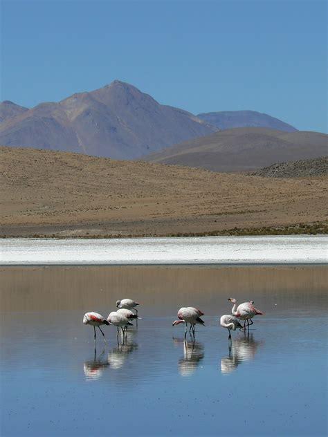 apéritif canapé file laguna ca 241 apa con flamencos potos 237 bolivia jpg