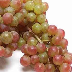 Pink Muscatel Grapes