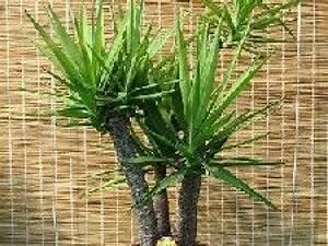 Entretien Plante Verte : nettoyer ses plantes vertes mode d 39 emploi ~ Medecine-chirurgie-esthetiques.com Avis de Voitures