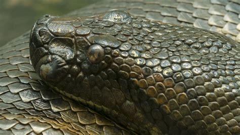 hd anaconda wallpaper pixelstalknet
