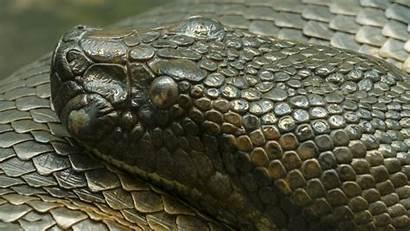Anaconda Pixelstalk