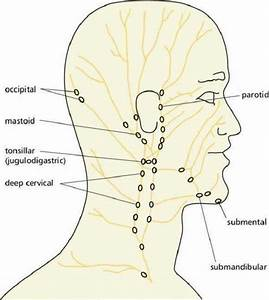 Neck Diagrams to Print | Diagram Site
