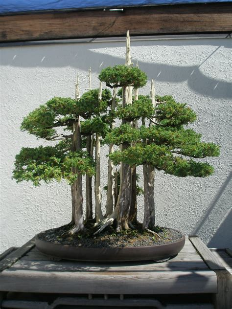deadwood bonsai techniques