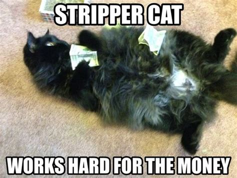 Male Stripper Meme - stripper cat meme cake money silly yes i have a board dedicated to cats pinterest