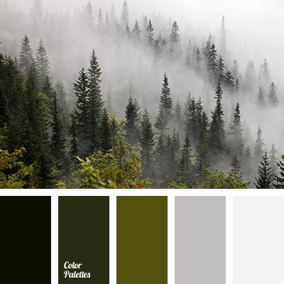 winter green color color matching green gray color forest