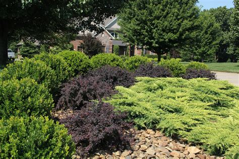 mass planting taking the work out of landscape maintenance state by state gardening