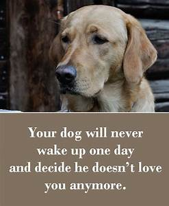 25+ best Puppy love quotes on Pinterest | Dog love, Dog ...