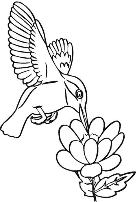 hermosos colibries  imprimir  pintar colorear imagenes