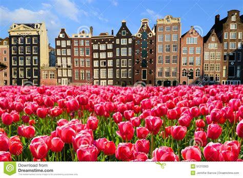 amsterdamse bloemen tulpen tulpen met kanaalhuizen van amsterdam stock foto