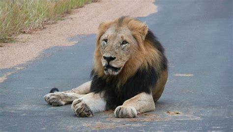 The Big Five At Paul Kruger National Park