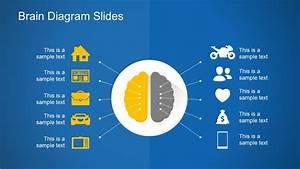 Free Brain Diagram Slides Powerpoint