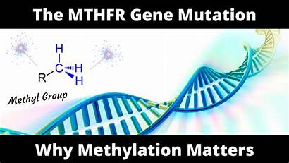 Mutation Gene Mthfr Why Methylation Importance Matters