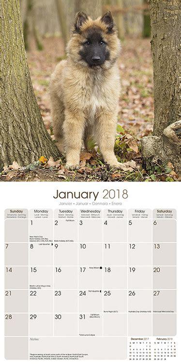 belgian shepherd dog calendars ukpostersabposterscom