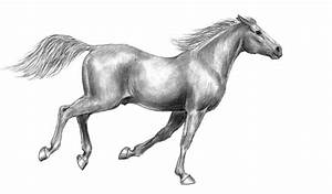 How to draw horse galloping