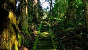 Download wallpaper 1920x1080 stairs, moss, trees, japan ...