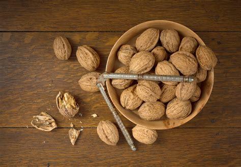 carpathian english walnut tree isons nursery vineyard