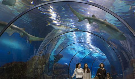 l aquarium sea l aqu 224 rium de barcelona visit barcelona tickets